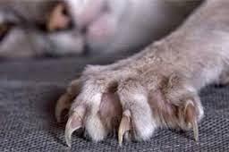 perempuan kena cakar kucing, kes kena cakar kucing, sampai hati putih, wanita kena cakar kucing, sebab-sebab kucing mencakar, sebab-sebab kena cakar kucing, kena cakar kucing,