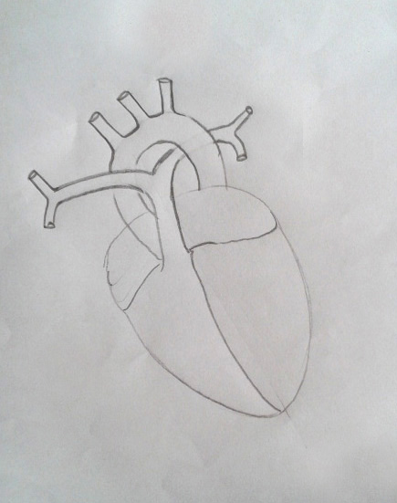 Draw it neat how to draw human heart labeled draw a imaginary aorta arching around as shown ccuart Image collections