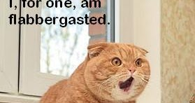 flabbergasted-cat.jpg