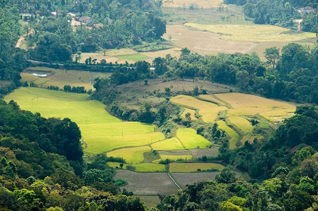 Coorg:  Honeymoon Destinations in South India