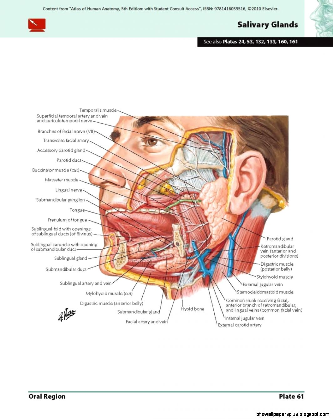 Netter S Anatomy | HD Wallpapers Plus