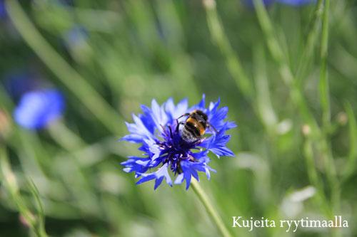 Kukka ja mehiläinen