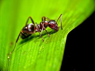 Revestimento dos animais invertebrados~