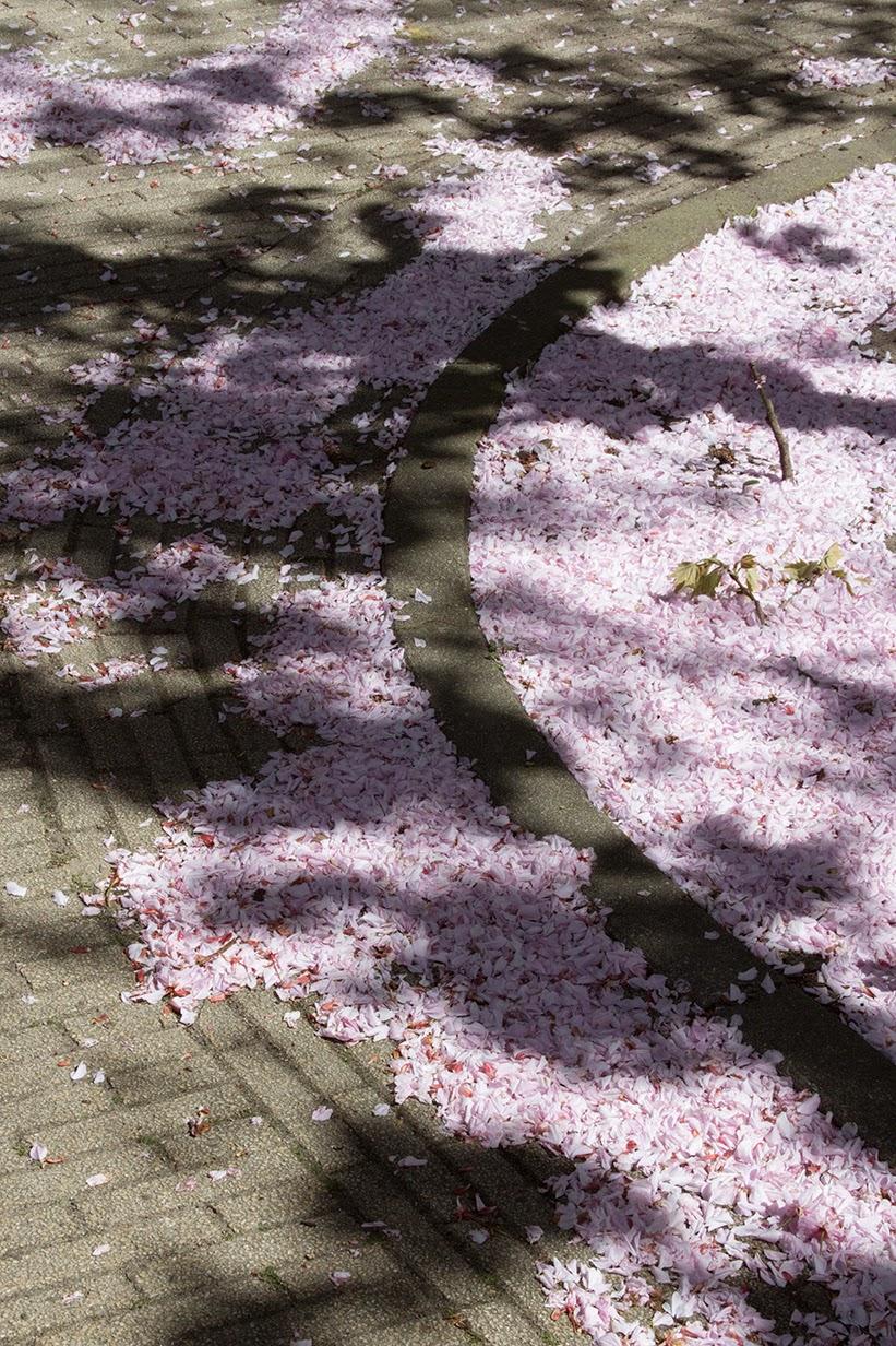 pink petals in the curb