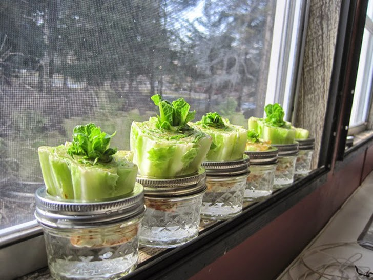 5 Vegetales Faciles de Cultivar sin Semillas