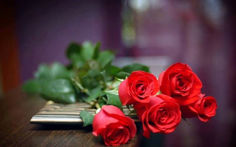 Top Five Beautiful Red Rose Flowers Image Wallpapers Pictures Online Free Stock