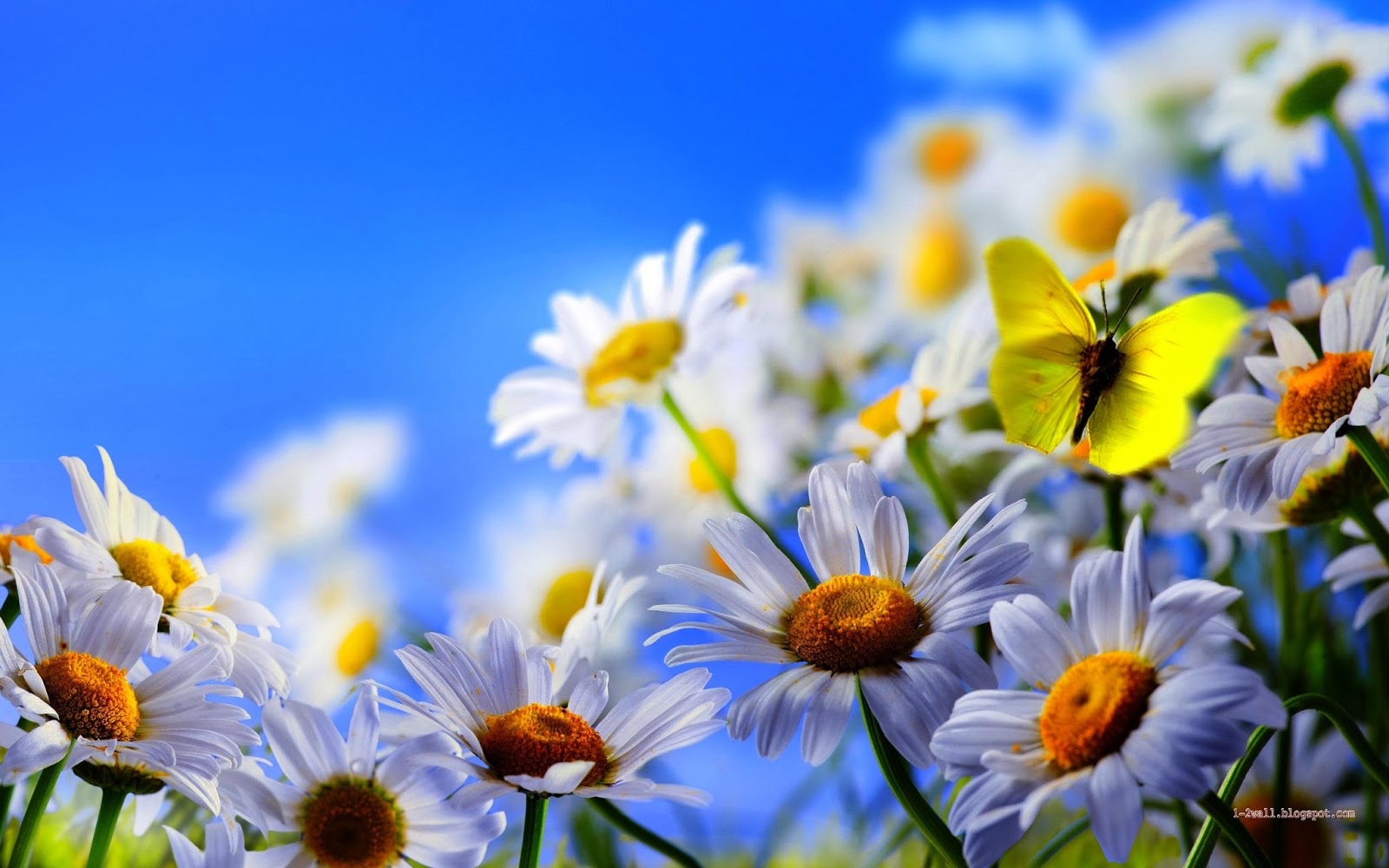 1 2wall allah names hd wallpapers islamic wallpapers for Butterfly in a flower