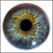 Eye colour is often considered a very straightforward trait, .