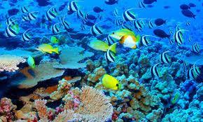 thế giới dưới đáy biển