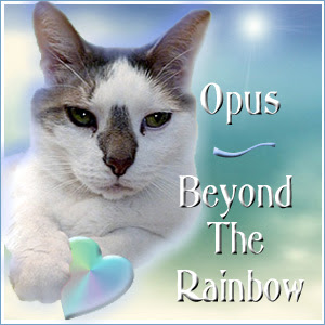 Remembering Opus