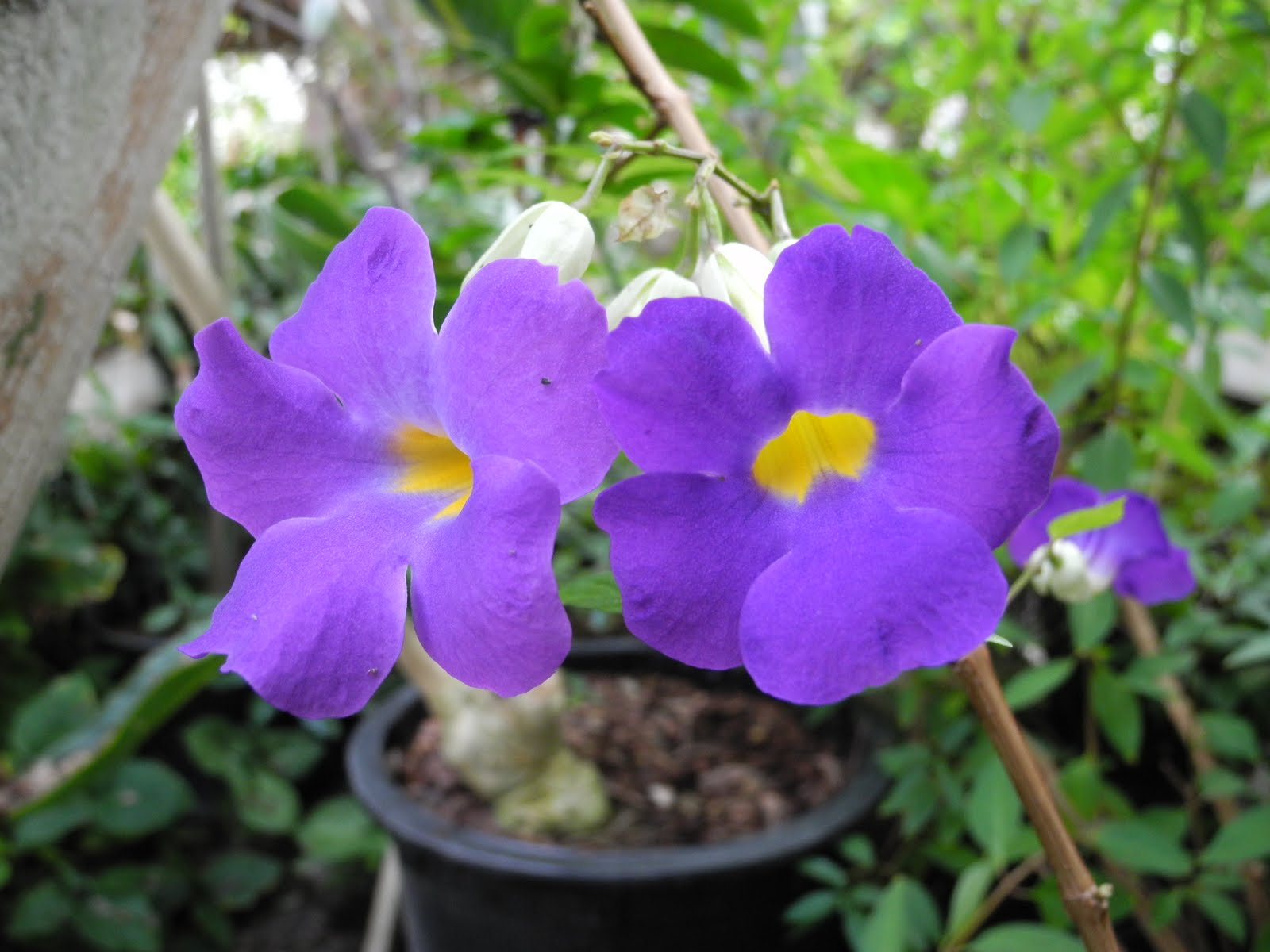 Tropical Flower Names Tropical Flower Names List