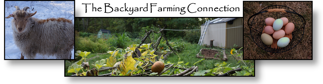 The Backyard Farming Connection