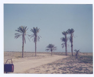 group of palm trees near the coast
