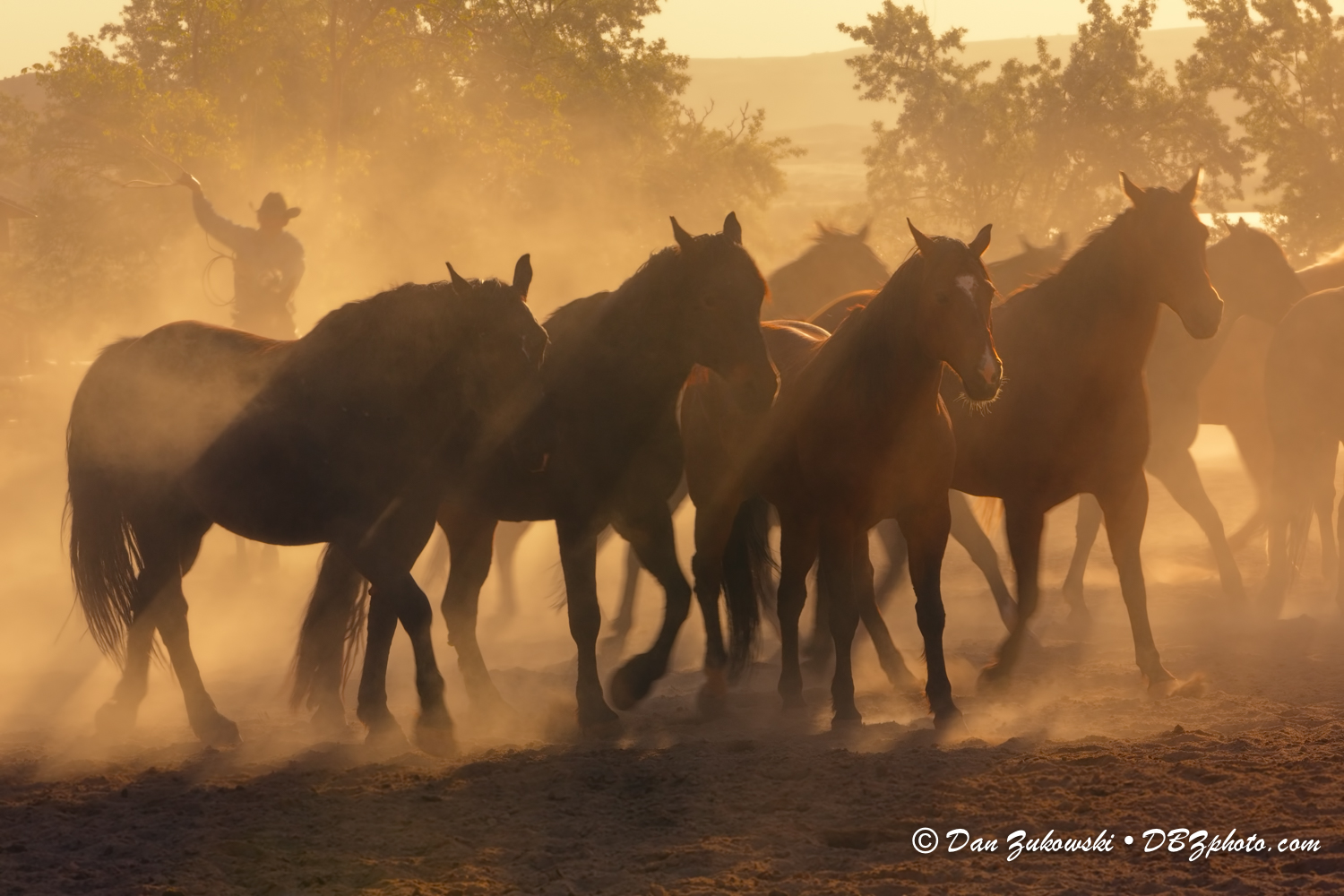 Horses and cowboy running in morning light