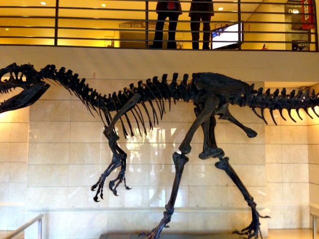 Dinge mit Kindern unternehmen in Madrid Naturkundemuseum