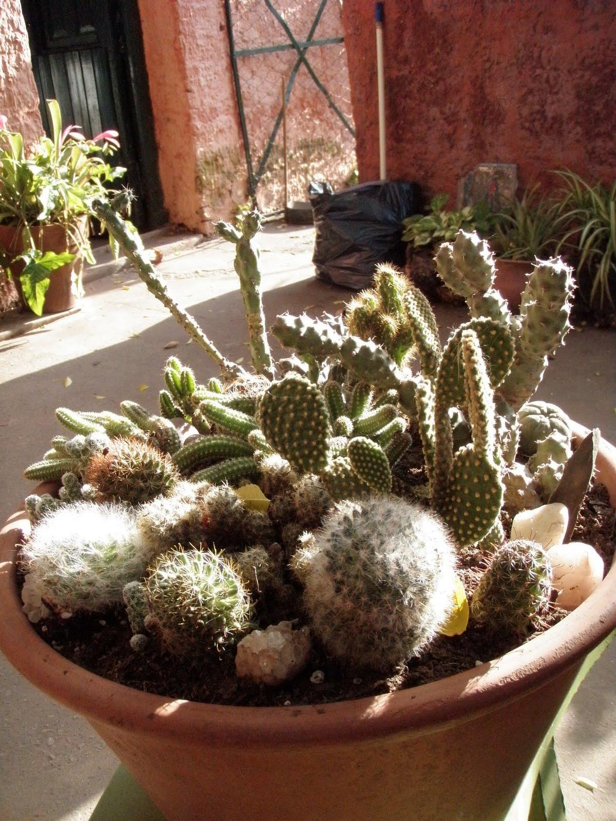 Jardines de cactus y suculentas composiciones realizadas - Jardines de cactus y suculentas ...