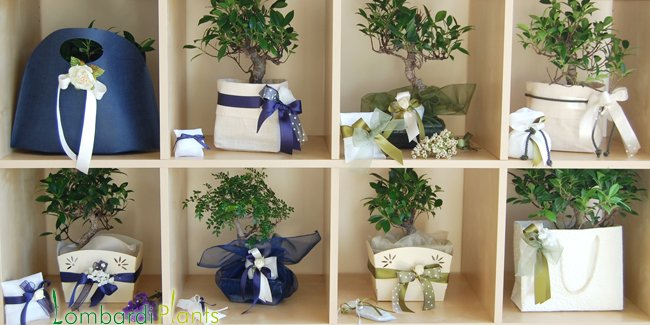 Parentesi wedding blog bonsai per bomboniera for Bonsai prezzi