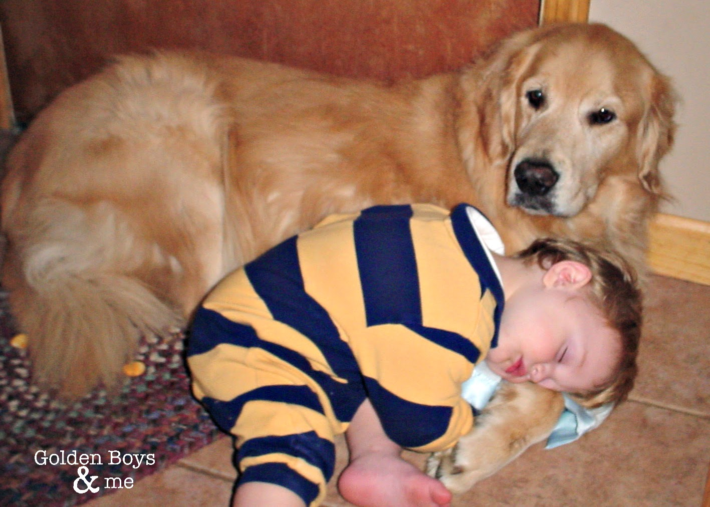 Golden Retriever and toddler sleeping-www.goldenboysandme.com