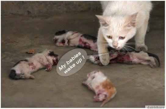Menyayat Hati Ibu Kucing Meratapi Kematian Anak Anaknya Yang Dibunuh