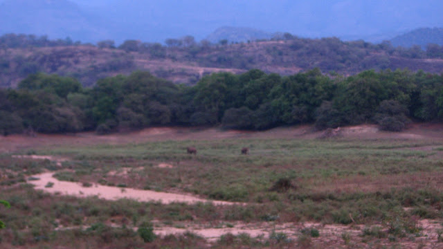 Elephants, Chinnar Wildlife Sanctuary