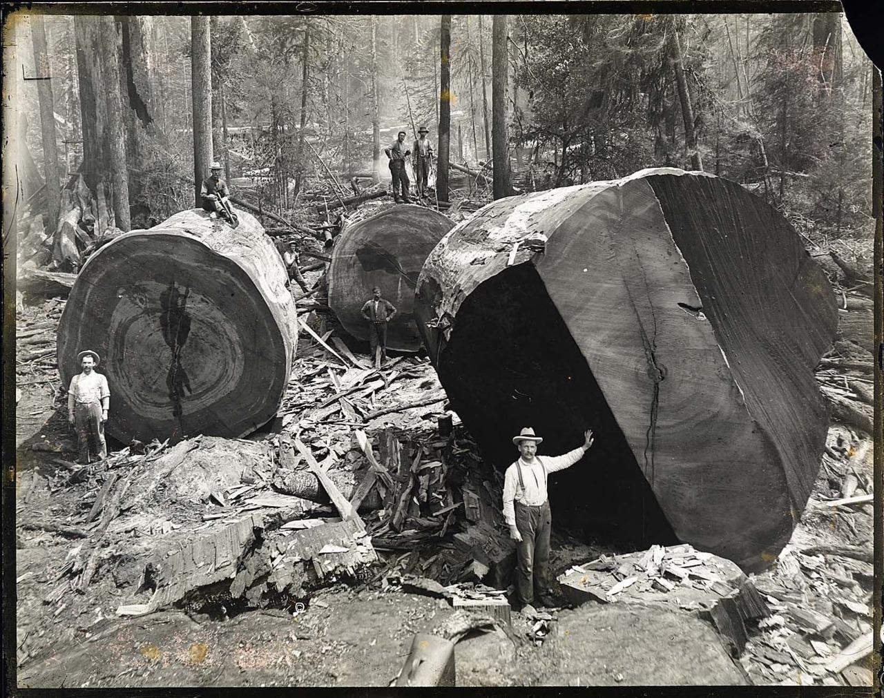 Рассказ геологи повалили женщину 5 фотография