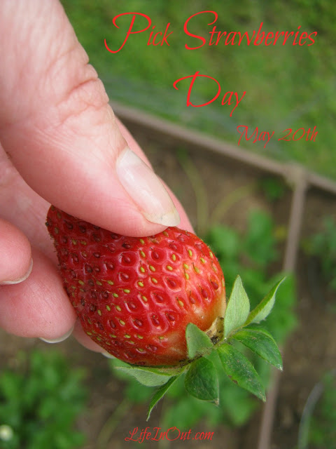 Pick Strawberries Day is celebrated on May 20th. In 2015, this special occasion falls on a Wednesday. In 2016 we'll celebrate on a Friday.