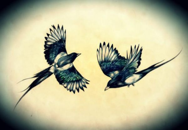 Pin Magpie Outline On Pinterest