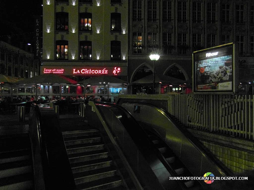 La chicoree - Lille