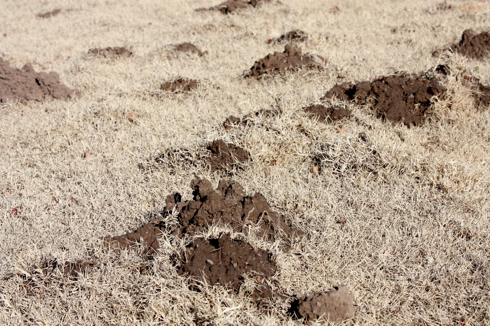 all the dirt on gardening holes in the yard gophers moles