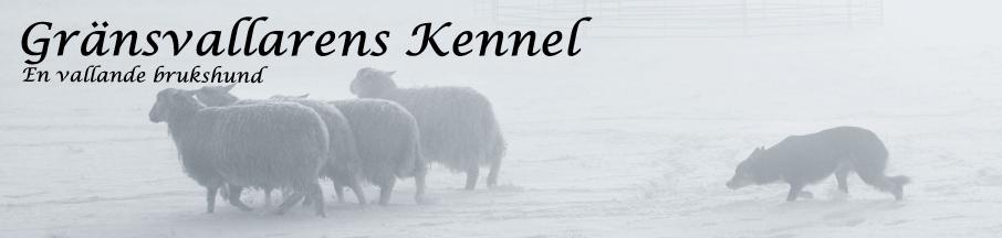Gränsvallarens Kennel