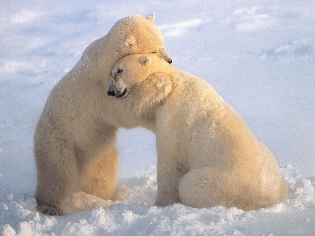 happy valentine u0026 39 s day  animal love pictures