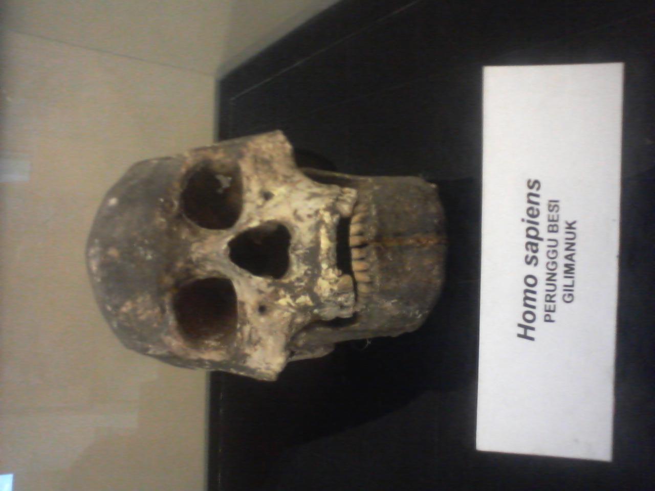 1280 x 960 · 261 kB · jpeg, Fosil Tengkorak Homo sapiens Yang Hidup ...