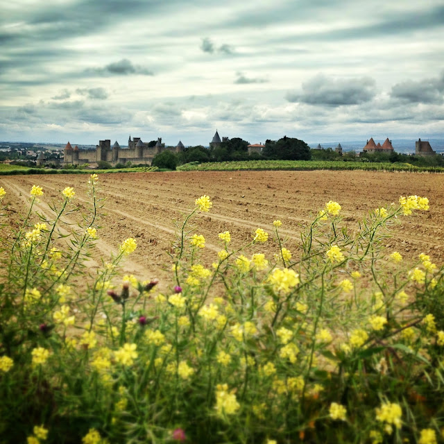 Looking across a vineyard to the walled city of Carcassonne in the South of France