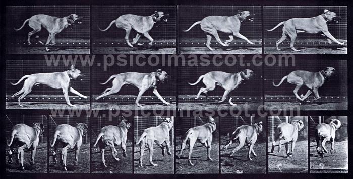 PSICOLMASCOT: El Aparato Locomotor del Perro