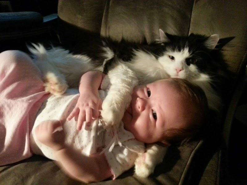 Foto baby lucu tengah bermain dengan asyik sama kucing kesayangannya