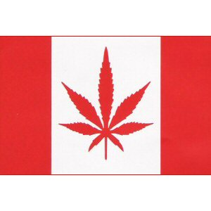 canadian flag withleaf