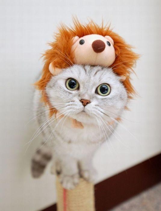 ¡Otaunjobi Omedettou Yuu chan♥!  Gato+Mascota+Peluche