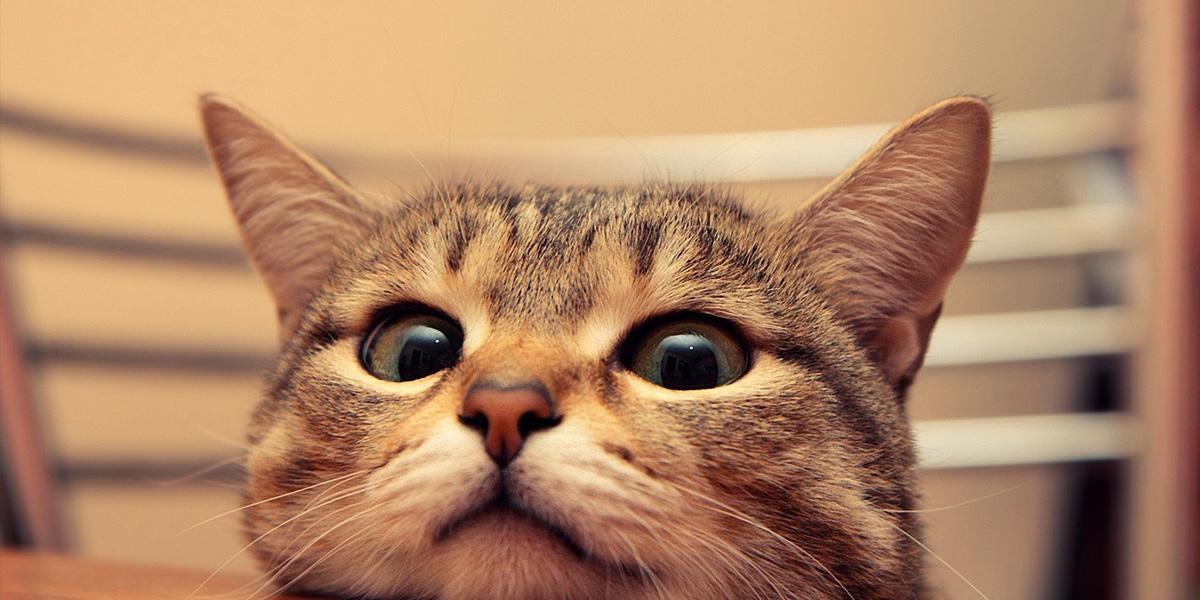 Cat 300+ Muhteşem HD Twitter Kapak Fotoğrafları