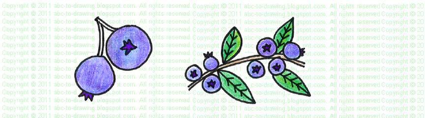 Blueberry Plant Drawing