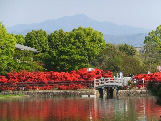 八条ヶ池に映える真紅のキリシマツツジ。
