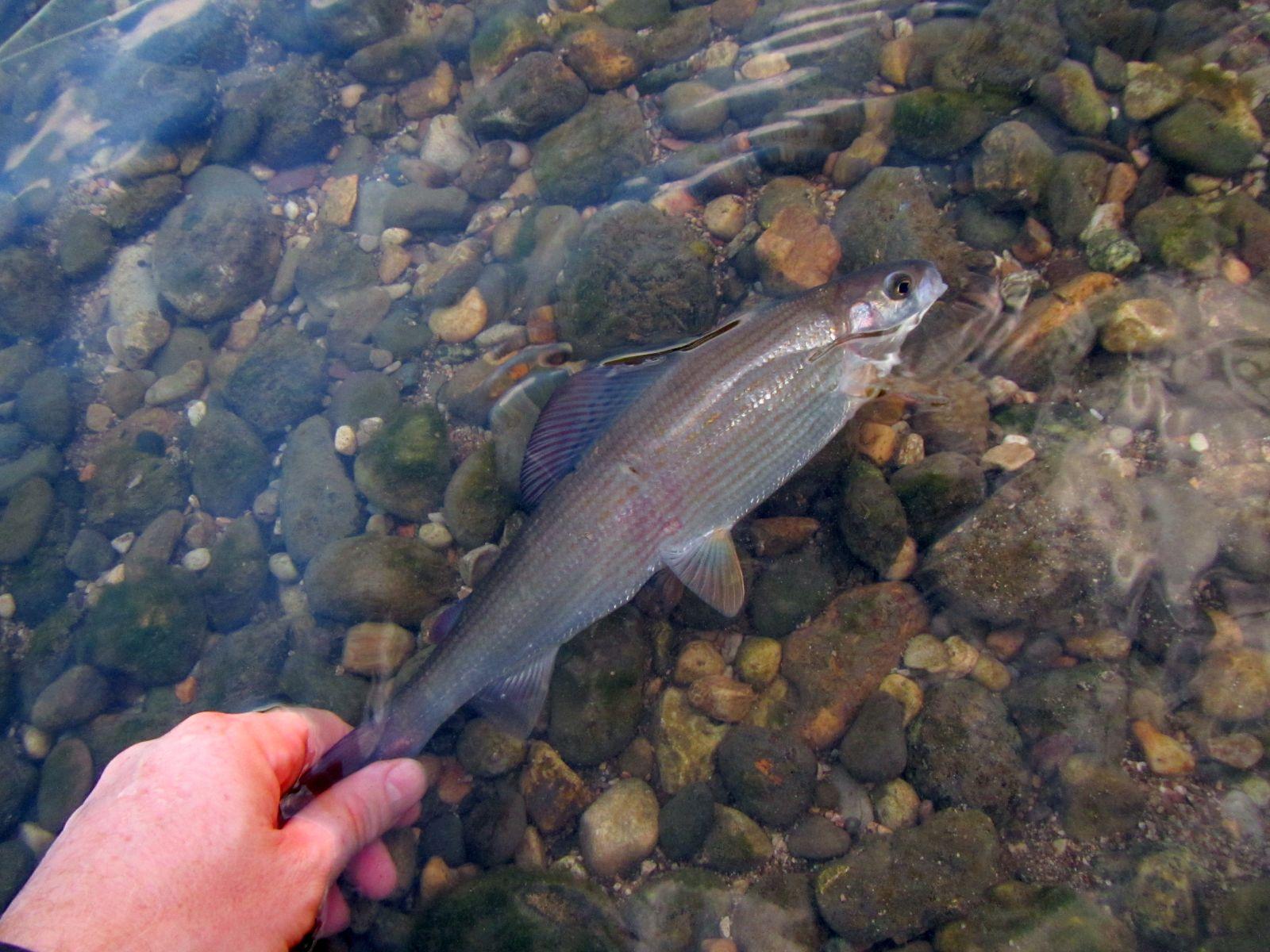 Regione di fiume da pesca Ufa Sverdlovsk