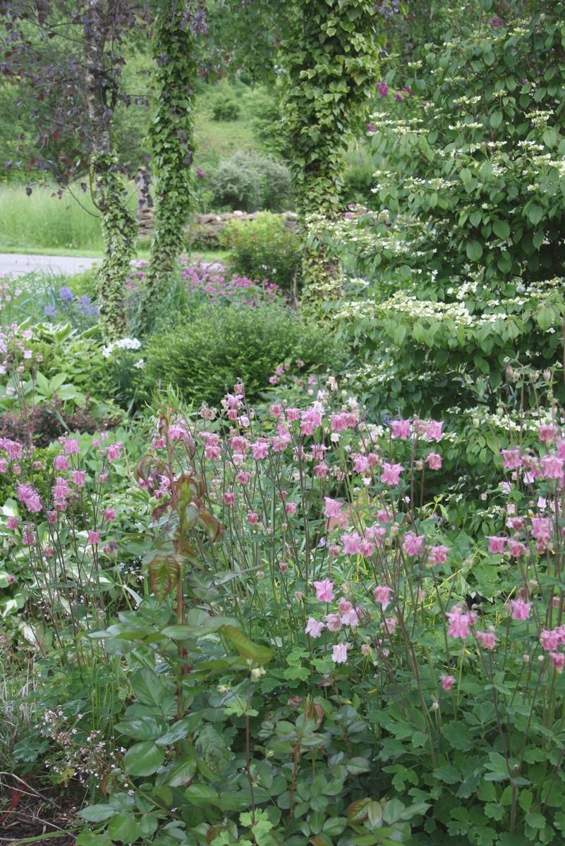 Ma derni re grosse commande le blog de mon doubs jardin for Jardin 7 17