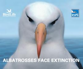 Save the Albatross