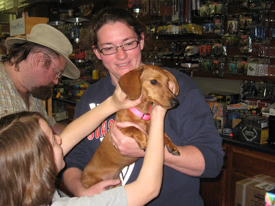 Tammy, HyperMind, miniature dachshund, dogs