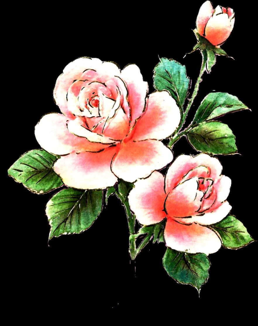 Pink Rose Clipart   Cliparts and Others Art Inspiration