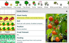 Eat Live Grow Paleo Square Foot Gardening Planning