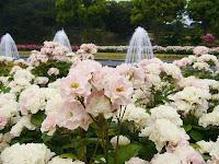 兵庫県・須磨離宮公園 王侯貴族のバラ園