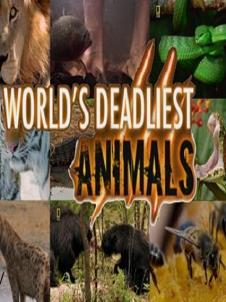 Những Loài Động Vật Nguy Hiểm Nhất - Worlds Deadliest Animals