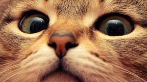 Gambar kucing ukuran 300px dengan cara Save for Web.