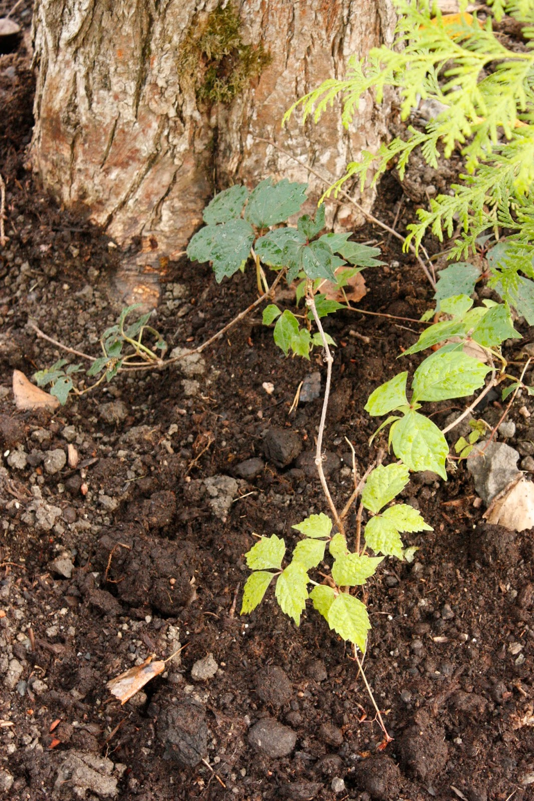 Josefins trädgård: Gräv, gräv, gräv - bara gräv, gräv, gräv